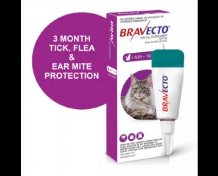 bravecto-spot-on-large-cat