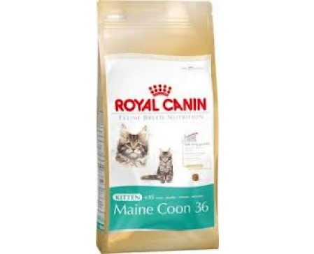royal-canin-kitten-maine-coon