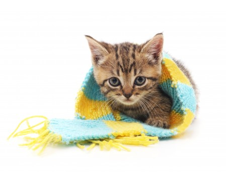 bagnwag-cat-blanket-charity-animal-anticruelty-league