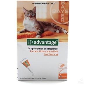 Advantage Cat S