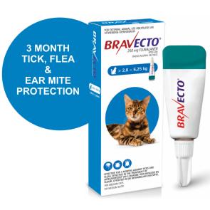 bravecto-spot-on-medium-cat