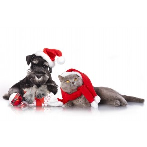 puppy-christmas-pack-free-pet-insurance
