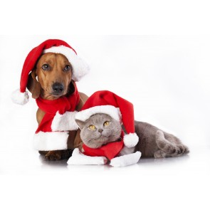 small-breed-dog-christmas-pack-pet-insurance