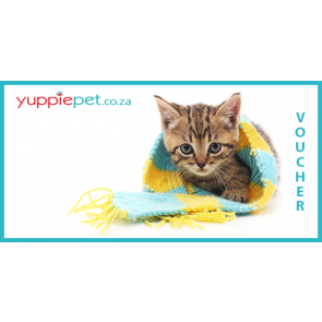 Gift Card - Kitten with scarf