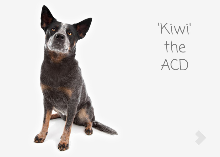'Kiwi' the ACD